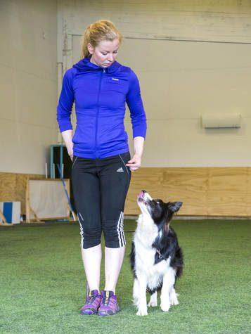 Koira ja ohjaaja peruskoulutuksessa.